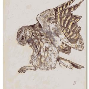 Illustratie steenuil op gerecycled papier-